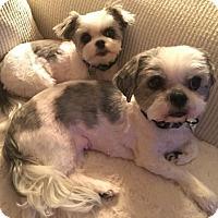 Adopt A Pet :: Missy 3246 - Toronto, ON