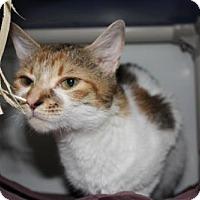 Adopt A Pet :: INGRID - Boston, MA