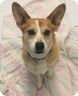 Small Young Dogs For Adoption In Nj
