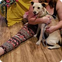 Adopt A Pet :: Moji - Chiefland, FL