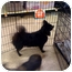 Photo 2 - Pomeranian/Terrier (Unknown Type, Medium) Mix Dog for adoption in Fowler, California - Baby