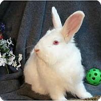 Adopt A Pet :: Simba - Newport, DE