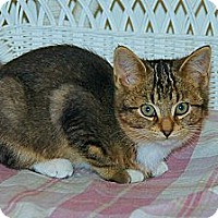 Adopt A Pet :: Misty - Victor, NY