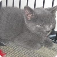 Adopt A Pet :: Miesha - Dallas, TX