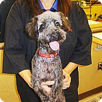 Adopt A Pet :: Edwin - Orange Park, FL