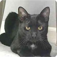 Adopt A Pet :: Lucky - Lunenburg, MA