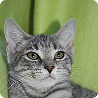 Adopt A Pet :: Blossom - Richland, MI
