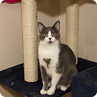 Adopt A Pet :: Jackie - Chicago, IL