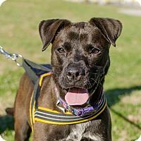Adopt A Pet :: Mollie - Greenwood, SC