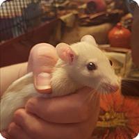 Adopt A Pet :: Sauvignon & Chardonnay - Dallas, TX