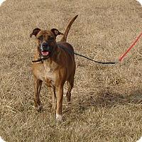 Adopt A Pet :: Ripley - Cameron, MO