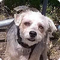 Adopt A Pet :: Corky - Campbell, CA
