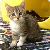 Adopt A Pet :: Eclaire - Warren, OH