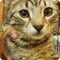 Adopt A Pet :: BUTCH - Clayton, NJ