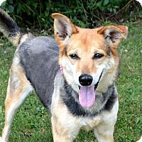 Adopt A Pet :: Rosie - Oakland, MI