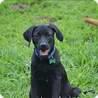 Adopt A Pet :: Chase - Neosho, MO
