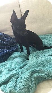 Chihuahua Mix Dog for adoption in Los Angeles, California - Dorothy