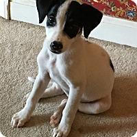 Adopt A Pet :: Sheba - Philadelphia, PA