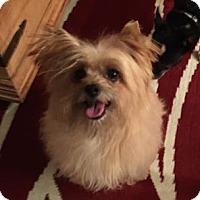 Adopt A Pet :: Taj - Las Vegas, NV