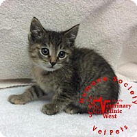 Adopt A Pet :: Eclaire - Janesville, WI