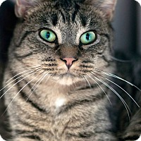Adopt A Pet :: Tiggy - Manahawkin, NJ
