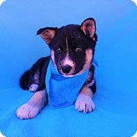 Adopt A Pet :: Allister - Burbank, CA