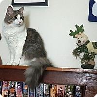 Adopt A Pet :: Zander - Vancouver, BC