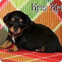 Adopt A Pet :: Kris Kringle - Houston, MO