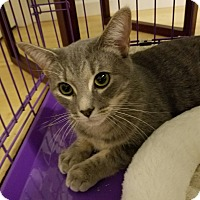 Adopt A Pet :: Remi (with Fieval) - Fairfax, VA
