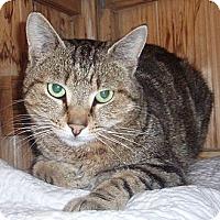 Adopt A Pet :: Lucky - Germansville, PA