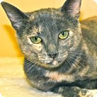 Adopt A Pet :: BP - Atlanta, GA