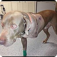 Adopt A Pet :: TOBIE - Loxahatchee, FL