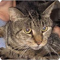 Adopt A Pet :: Cassie - Catasauqua, PA
