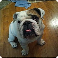 Adopt A Pet :: Gus - Arlington, TX
