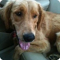 Adopt A Pet :: Guthrie - Foster, RI