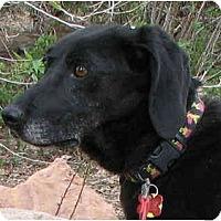Adopt A Pet :: Ruby (Flagstaff) - Scottsdale, AZ