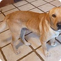 Adopt A Pet :: CLEVELAND - Paron, AR