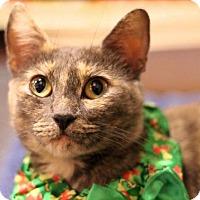Adopt A Pet :: Oro - Sacramento, CA