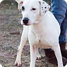 Adopt A Pet :: Betsy