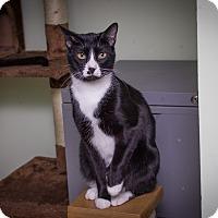 Adopt A Pet :: Chris - Chicago, IL