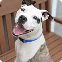 Adopt A Pet :: Ghenga - Long Beach, NY
