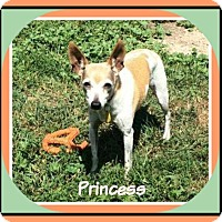 Adopt A Pet :: Princess - New Richmond,, WI