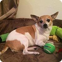 Adopt A Pet :: Zoie - Gainesville, FL