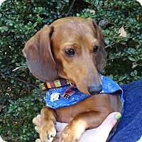 Adopt A Pet :: WILLIE - Portland, OR