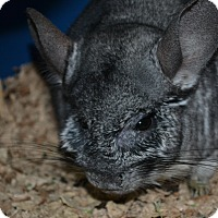 Adopt A Pet :: Dusty - Patchogue, NY