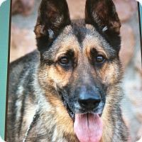 Adopt A Pet :: AXEL VON AXEL - Los Angeles, CA