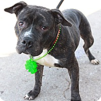 Adopt A Pet :: Petunia - Kewanee, IL