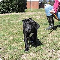 Adopt A Pet :: Miracle - Berkeley Heights, NJ