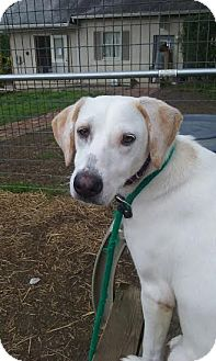 Hound (Unknown Type) Mix Dog for adoption in Media, Pennsylvania - Cher (foster) *Updated*