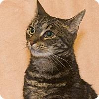 Adopt A Pet :: Trixie - Elmwood Park, NJ